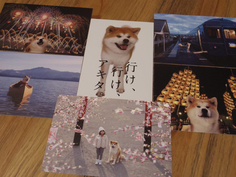 秋田犬ポストカードを差し上げています(8月27日~)